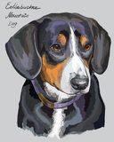 Entlebucher Mountain Dog colorful vector hand drawing portrait. Entlebucher Mountain Dog vector hand drawing illustration in different color on grey background Stock Images