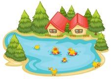 Entlein in einem Teich Lizenzfreie Stockbilder