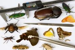 Entomología Foto de archivo