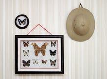 entomologa trofeum Obraz Royalty Free