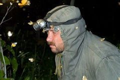 Entomologe 11 Lizenzfreie Stockfotografie