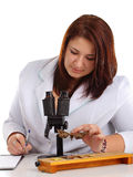 Entomologist identifying butterflies in laboratory Stock Image