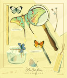 Entomology. Royalty Free Stock Photos