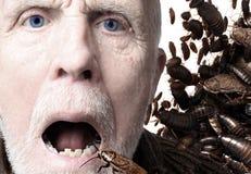 Entomophagy, insetti come alimento fotografia stock