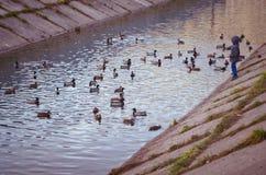 Entonnoir de rivière Images stock