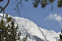 Entouré par les branches couronnées de neige Photographie stock libre de droits