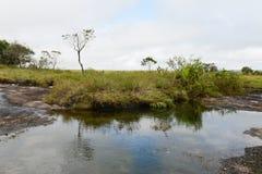 Entourage de la rivière Guayabero colombia Photos libres de droits