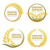 Entourez les produits organiques de grain de riz non-décortiqué et la conception saine de vecteur de nourriture Image stock