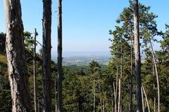 Enträd skog Fotografering för Bildbyråer