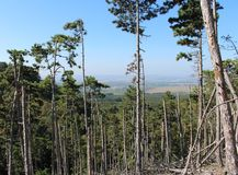 Enträd skog Royaltyfri Foto