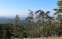 Enträd skog Royaltyfri Fotografi