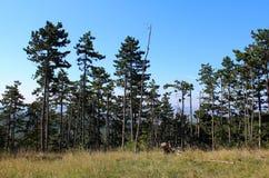 Enträd skog Royaltyfri Bild