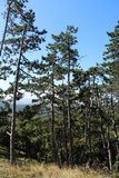 Enträd skog Arkivbilder
