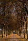 Entrée à l'automne Image libre de droits