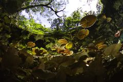 Entrée au cenote de gran Photo libre de droits