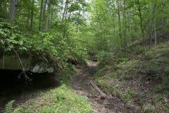 Entrée de caverne dans les bois Photo libre de droits