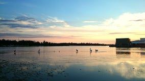 Entrée de lacs dusk @, Australie Images libres de droits