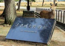 Entrée de Musée National et de cerfs communs de Nara Vues du Japon photo libre de droits