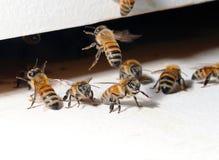 Entrée de ruche photo libre de droits