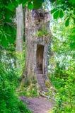 Entrée enchantée magique de cabane dans un arbre Photos stock