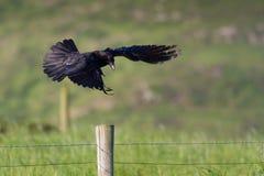 Entrée pour un atterrissage ! photo libre de droits