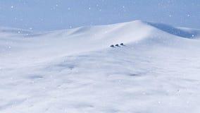 Entraînement de voitures tous terrains par le désert arctique neigeux 4K banque de vidéos