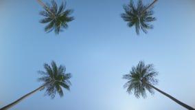 Entraîner une réduction la rue entre les paumes tropicales Animation de boucle Dans ultra HD illustration stock