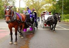 Entraîneur avec des chevaux dans le Central Park Image libre de droits
