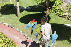 Entraîneur de femme tenant des perroquets d'ara Exposition de perroquets image libre de droits
