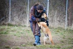 Entraîneur et son chien en cours de socialisation Photos libres de droits