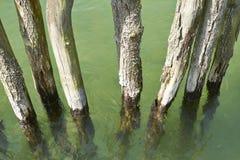 Entra a água Foto de Stock Royalty Free
