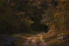 Entrace in het diepe bos stock fotografie