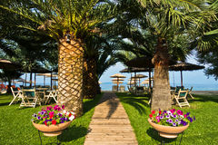 Entrada à praia através da aleia das palmeiras, Sithonia Fotografia de Stock