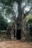 Entrada al templo antiguo del som de TA en el complejo de Angkor, Camboya Imagen de archivo