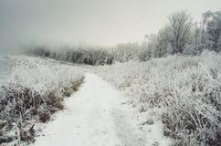 Entrada congelada da floresta no inverno com neve Fotografia de Stock