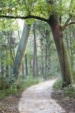 A entrada da floresta fotos de stock royalty free