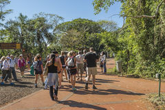 Entrada da garganta de Devilno parque de Iguazu em Argentina Imagens de Stock Royalty Free