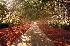 entrada de automóveis Árvore-coberta Fotos de Stock Royalty Free