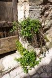 Entrada de la casa de piedra y de plantas mediterráneas foto de archivo libre de regalías