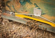 Entrada de la colmena de la abeja con las abejas Abejas de la miel en el colmenar casero Fotos de archivo libres de regalías