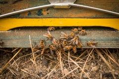 Entrada de la colmena de la abeja con las abejas Abejas de la miel en el colmenar casero Imagen de archivo libre de regalías