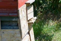Entrada de la colmena de la abeja Fotografía de archivo