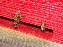 Entrada de la colmena de la abeja Imagen de archivo