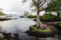 Entrada de la playa, Hilo, Hawaii Árbol en la península de la roca en primero plano; piscina lisa con las rocas y la vegetación d fotos de archivo libres de regalías