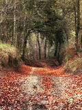 Entrada del bosque fotos de archivo