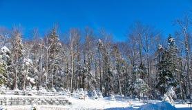 Entrada del bosque del invierno Imagenes de archivo