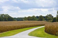 Entrada del campo de maíz Foto de archivo