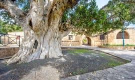 Entrada do pátio do monastério de Agia Napa em Chipre 2 Imagens de Stock