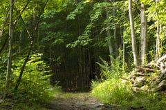 Entrada en un bosque oscuro Imágenes de archivo libres de regalías