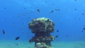 Entrada industrial subacuática de la tubería con los bajíos de pescados metrajes